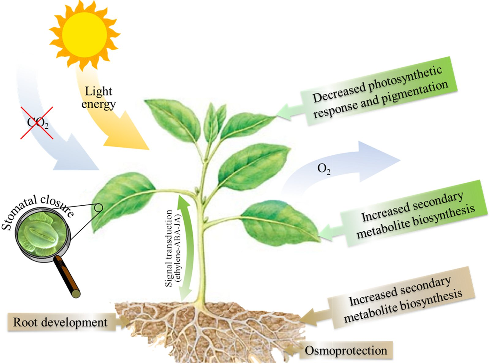 application of plant genetic engineering in horticulture